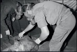 Les gendarmes de la prévôté procèdent à l'identification des corps retrouvés dans les décombres du poste Drakkar. Equipés de masque à gaz, les gendarmes prennent les empreintes digitales des victimes et nettoient leurs plaies, Beyrouth, 25 octobre 1983© ECPAD / Joël Brun