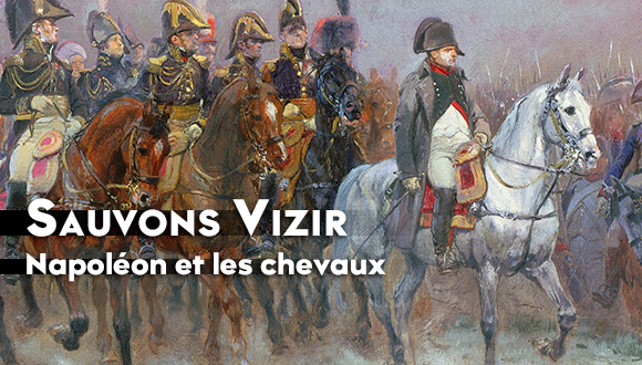 MA-Napoleon-chevaux