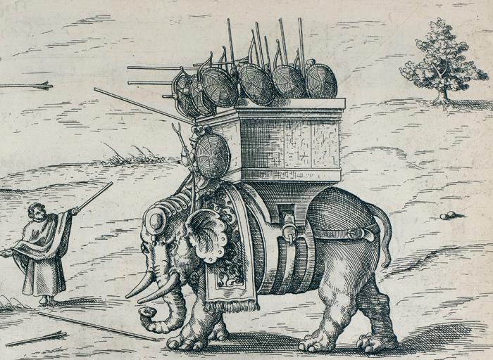 Eléphant de guerre - Cultea